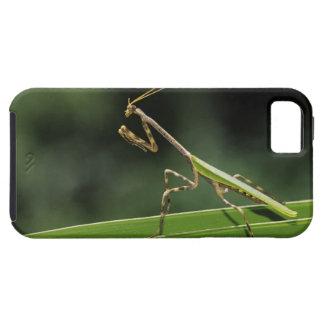 Mantid, Mantidae, adulto en la fronda de la palma, Funda Para iPhone SE/5/5s