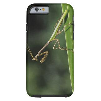 Mantid, Mantidae, adulto en la fronda de la palma, Funda Resistente iPhone 6