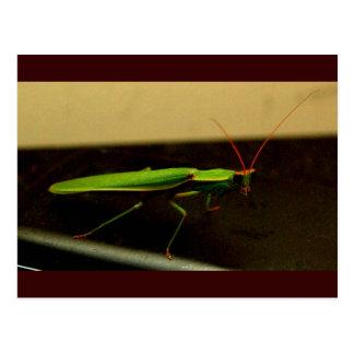 mantis1 postcard