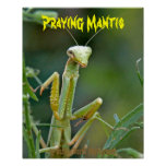 Mantis 475 Poster