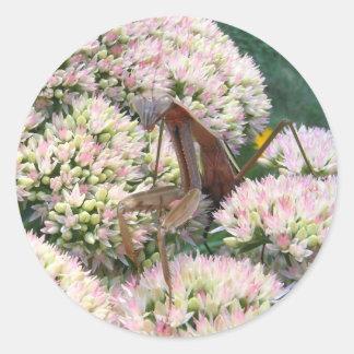 Mantis 82 ~ sticker