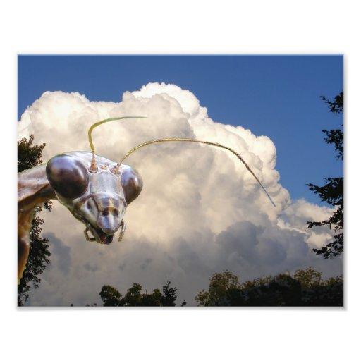 Mantis and Cloud ~ Photo