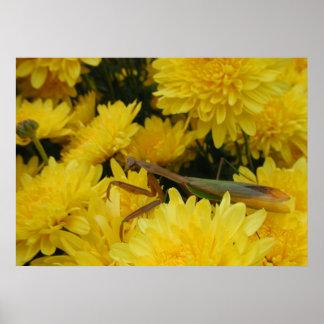 Mantis & Chrysanthemums - Poster #1