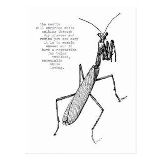 mantis postcard