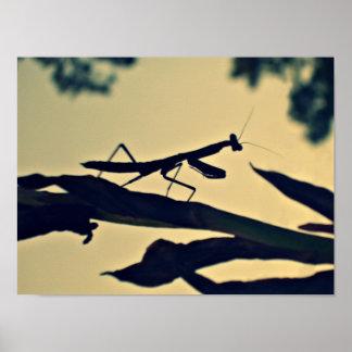 Mantis. Poster