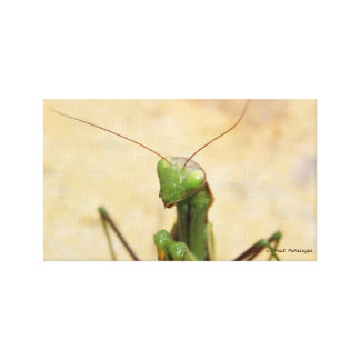 Mantis poster canvas print