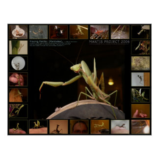 Mantis Project 2006 R1 Poster