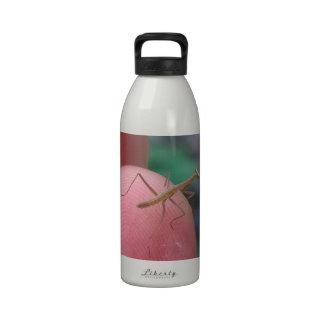 Mantis religiosa del bebé en el dedo botella de agua