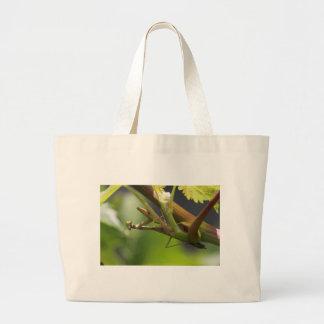 Mantis religiosa en la vid de uva bolsa
