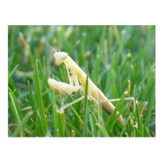Mantis religiosa en postal de la hierba