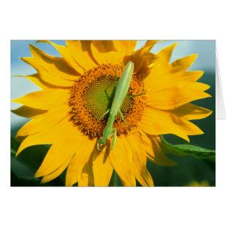 Mantis religiosa en un girasol tarjeta de felicitación