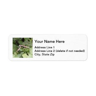 Mantis religiosa etiquetas de remite