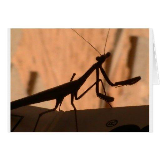 Mantis religiosa felicitacion