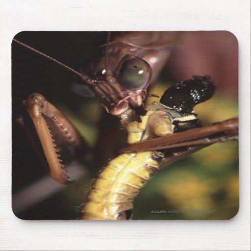 Mantis religiosa tapetes de ratón