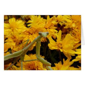 Mantis religiosa tarjeta de felicitación