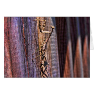 Mantis religiosa tarjeta