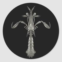 Mantis Shrimp Classic Round Sticker