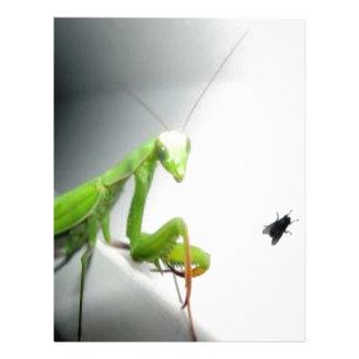 mantis with fly.jpg letterhead