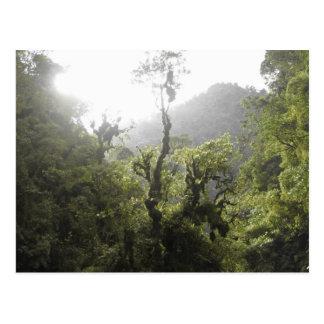 Manu National Park Postcard