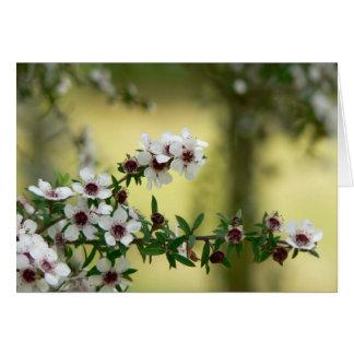 Manuka in bloom card