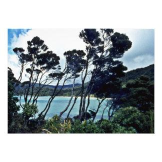 Manuka Shrubs And Beach Stewart Island Personalized Invitation