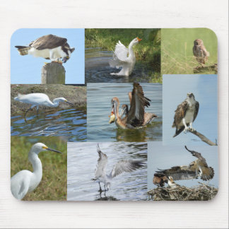 Many birds Hawks Ospreys Egrets Mousepad