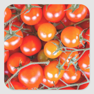 Many bunches of red vine tomatoes square sticker