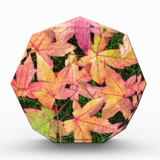 Many colorful autumn maple leaves on green grass acrylic award