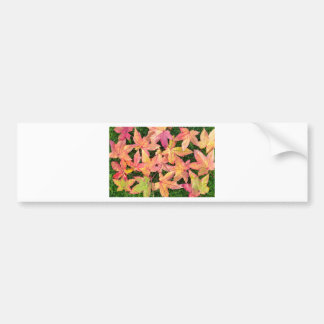 Many colorful autumn maple leaves on green grass bumper sticker