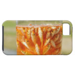 Many goldfish which are in the glass container iPhone 5 covers