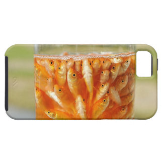 Many goldfish which are in the glass container iPhone SE/5/5s case