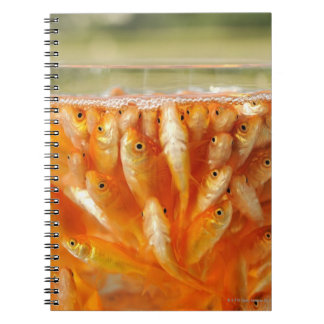 Many goldfish which are in the glass container spiral notebook
