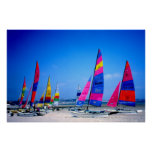 Many Hobie sailing boats in Jersey Poster