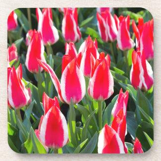 Many red-white tulips coaster