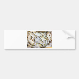 Many small caught dead fish with ice on market bumper sticker
