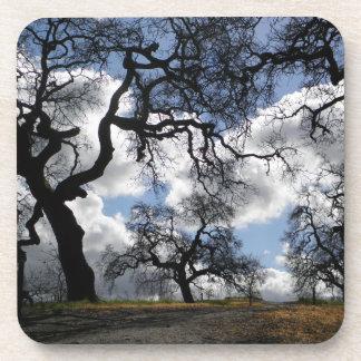 Many Spooky Trees Beverage Coaster