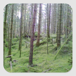 Many Tree Forest Square Stickers