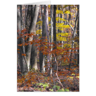 Many Trunks Greeting Card