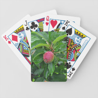 Manzana roja fresca en árbol cartas de juego