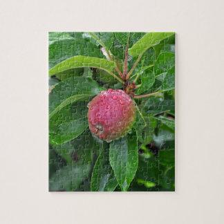 Manzana roja fresca en árbol puzzle