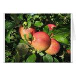 Manzanas de la gala tarjeta