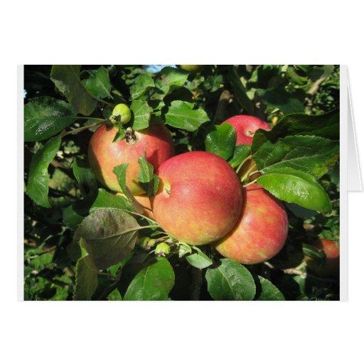 Manzanas de la gala tarjeta pequeña