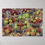 Manzanas de Macintosh del Estado de Nuevo York en  Poster