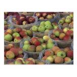 Manzanas de Macintosh del Estado de Nuevo York en Postal