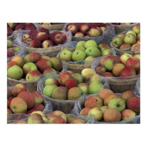 Manzanas de Macintosh del Estado de Nuevo York en  Tarjetas Postales