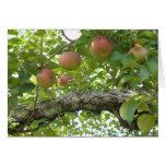 Manzanas que cuelgan en el árbol tarjeta de felicitación