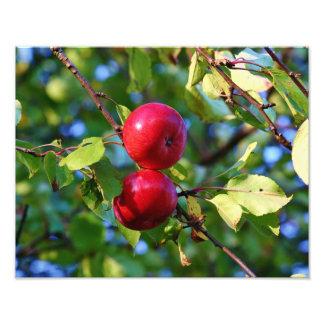Manzanas rojas brillantes fotografia