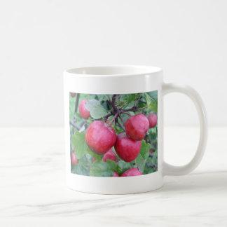 Manzanas rojas en el árbol taza