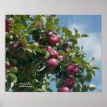 Manzanas rojas en la impresión del poster de la fo