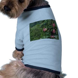 Manzanas rojas en ramas de árbol camiseta con mangas para perro